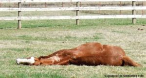 Colic Solutions: Microcurrent or Colic Remedies