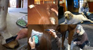 Best-Vet Treatments: Using Accessories