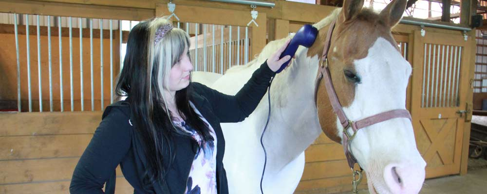 Soundwave Massage Treatment: A Sound Investment in Horse Health