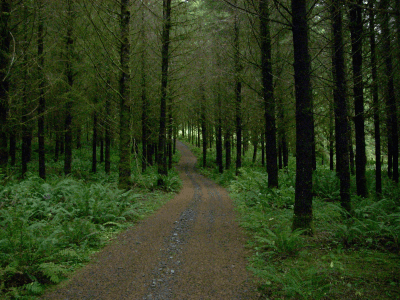 Wooded Pathway at Wonser Woods